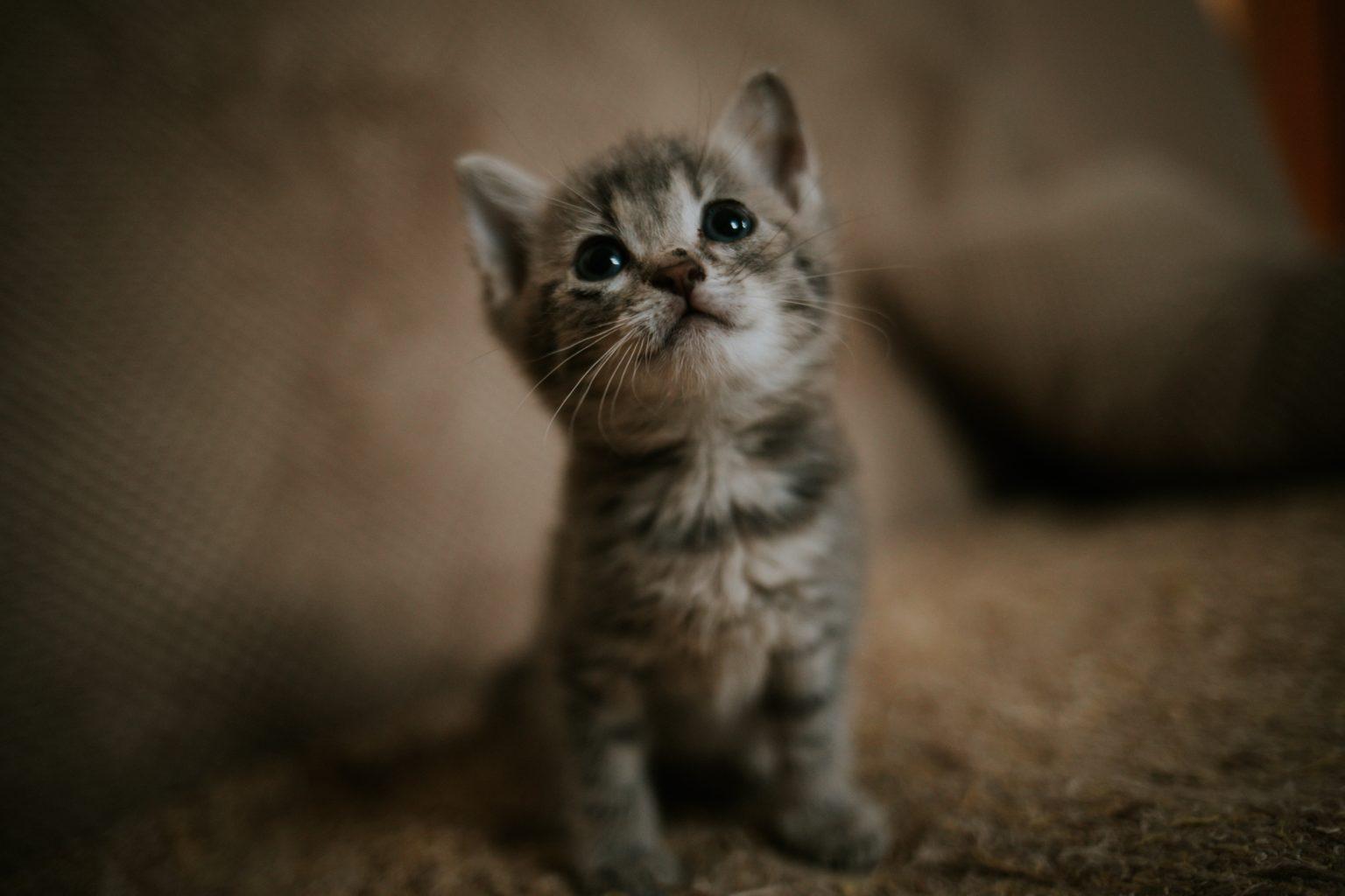 Katze kommt aus Pension zurück. Kann ich sie bei mir zu Hause gleich wieder rauslassen?