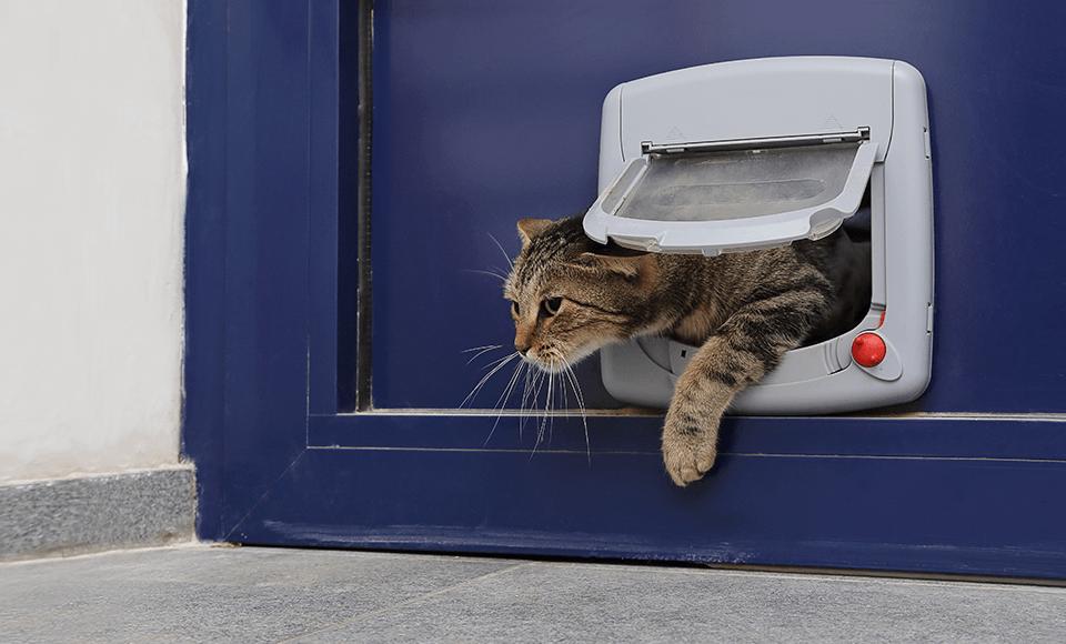 Die Katzenklappe - Nichts wie raus in die abenteuerliche Natur