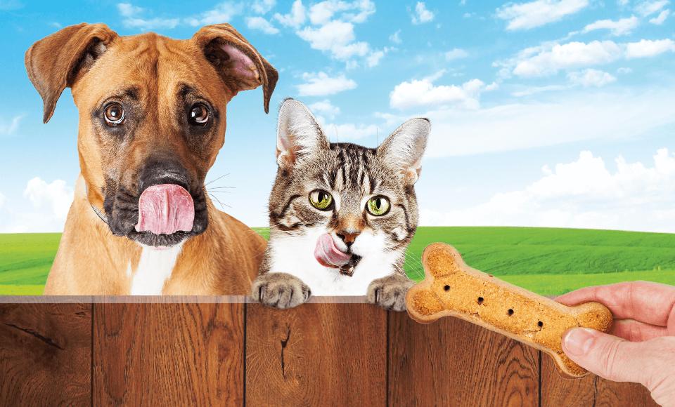 Snacks für Hund und Katze