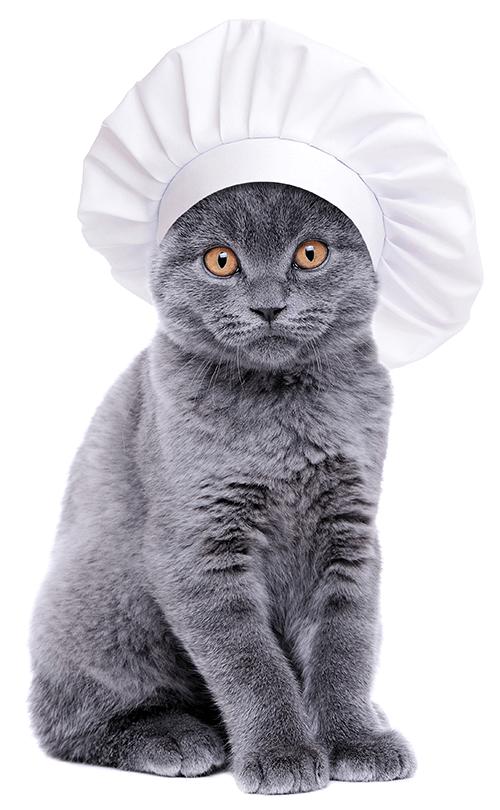 Rezept für Lamm-Häppli (nur für Katzen)