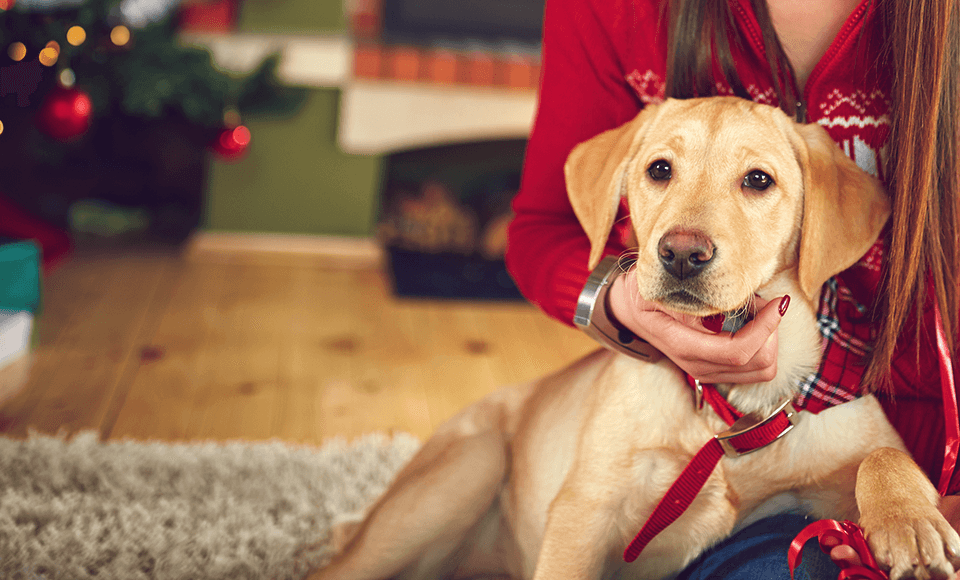 Ein Tier zu Weihnachten