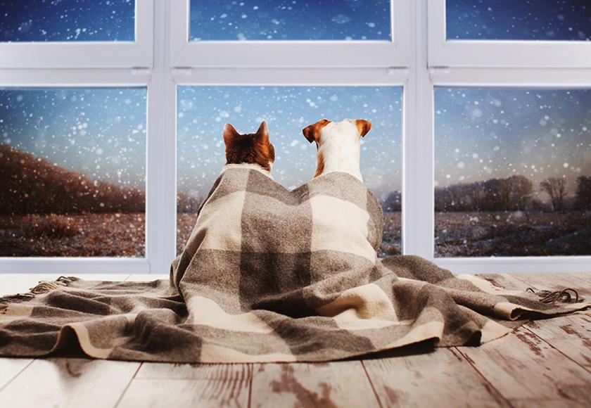 Wintertipps Hund Katze