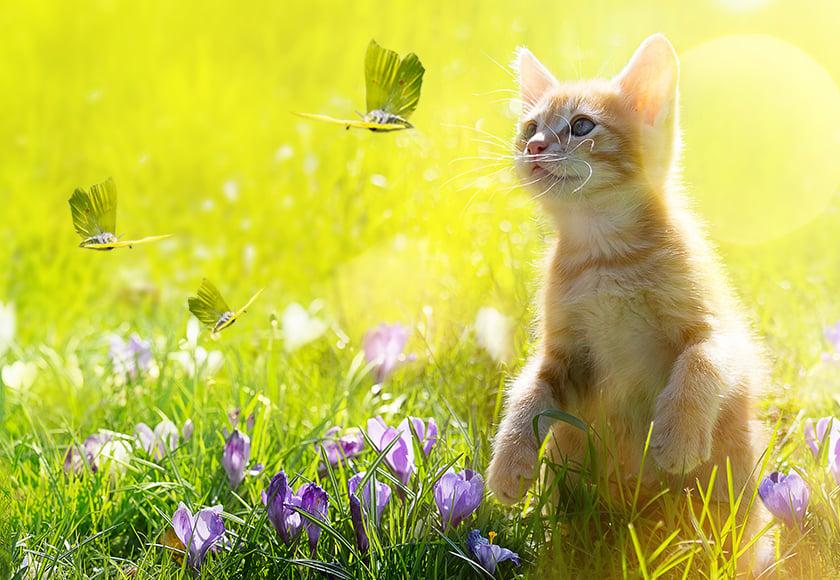 Frühlingstipps Katze Hund