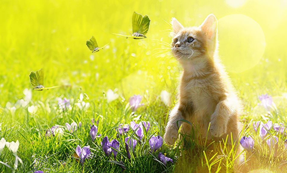 Frühlingstipps