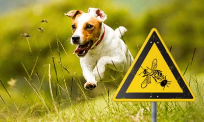 Zecken & Insekten
