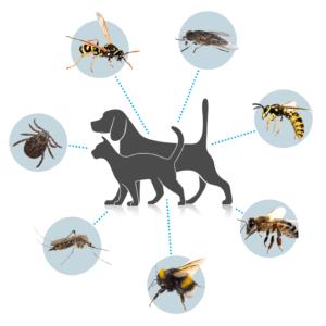 Lästige Zecken, Insekten und Parasiten