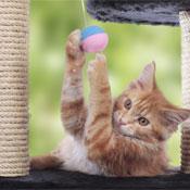 Katzenbäume und Kratzspielzeug