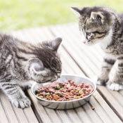 Näpfe für Katzen