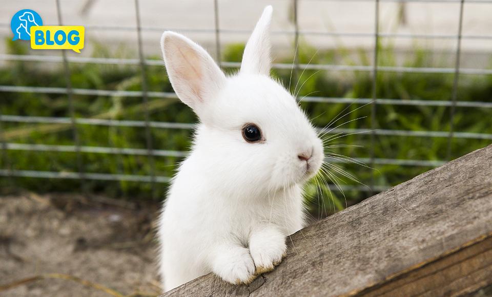 Kaninchenstall-Hasenstall-Freilaufgehege