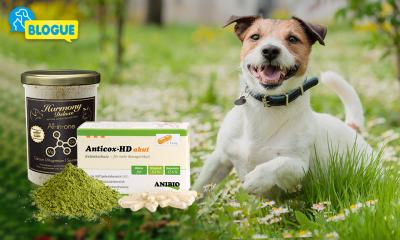Huile de noix de coco, biotine & Cie – De quelles vitamines & compléments alimentaires mon chien a-t-il besoin ?