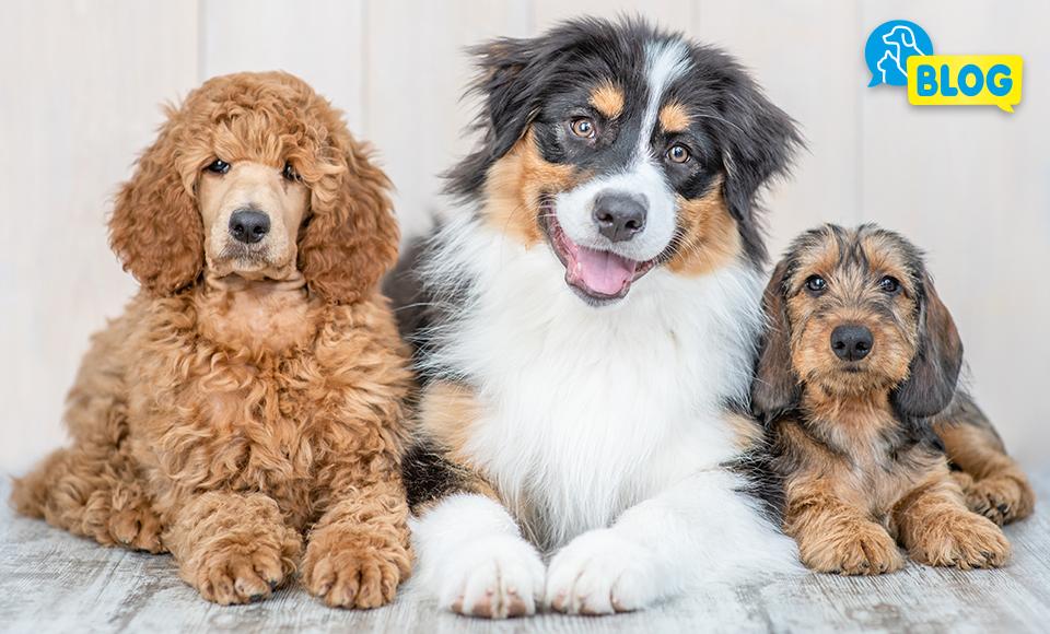 beliebte-hundenamen