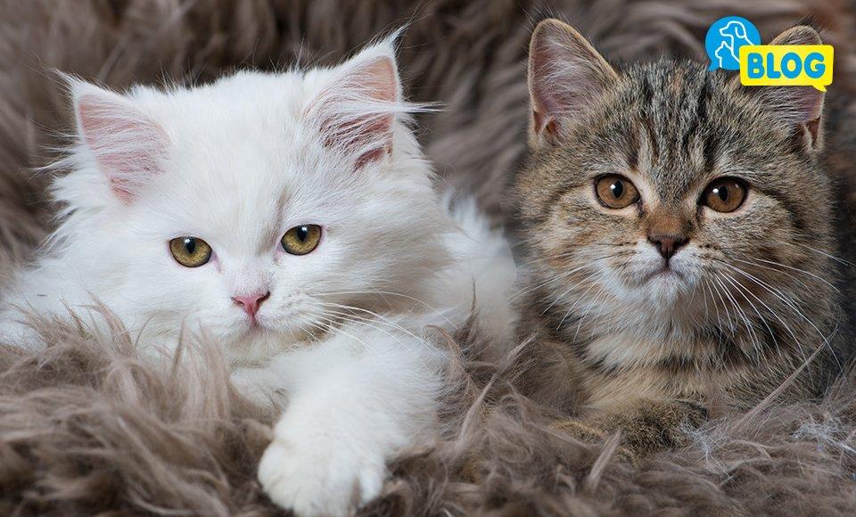 Beliebte-Katzennamen