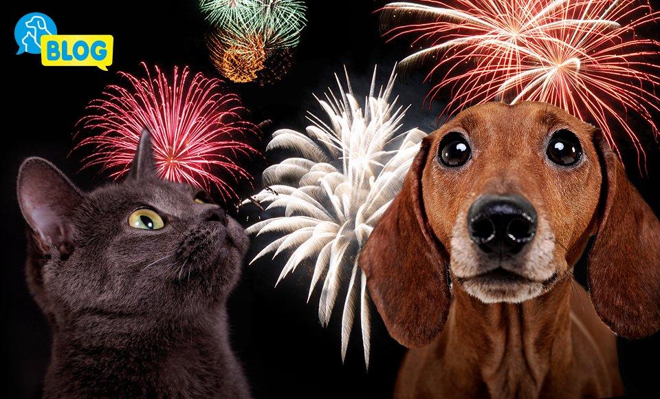 August-Feuerwerk-Stress-Beruhigungsprodukte-Hund-Katze