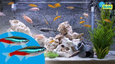 Fischgruppenvertraeglichkeit-Aquarium-Fische