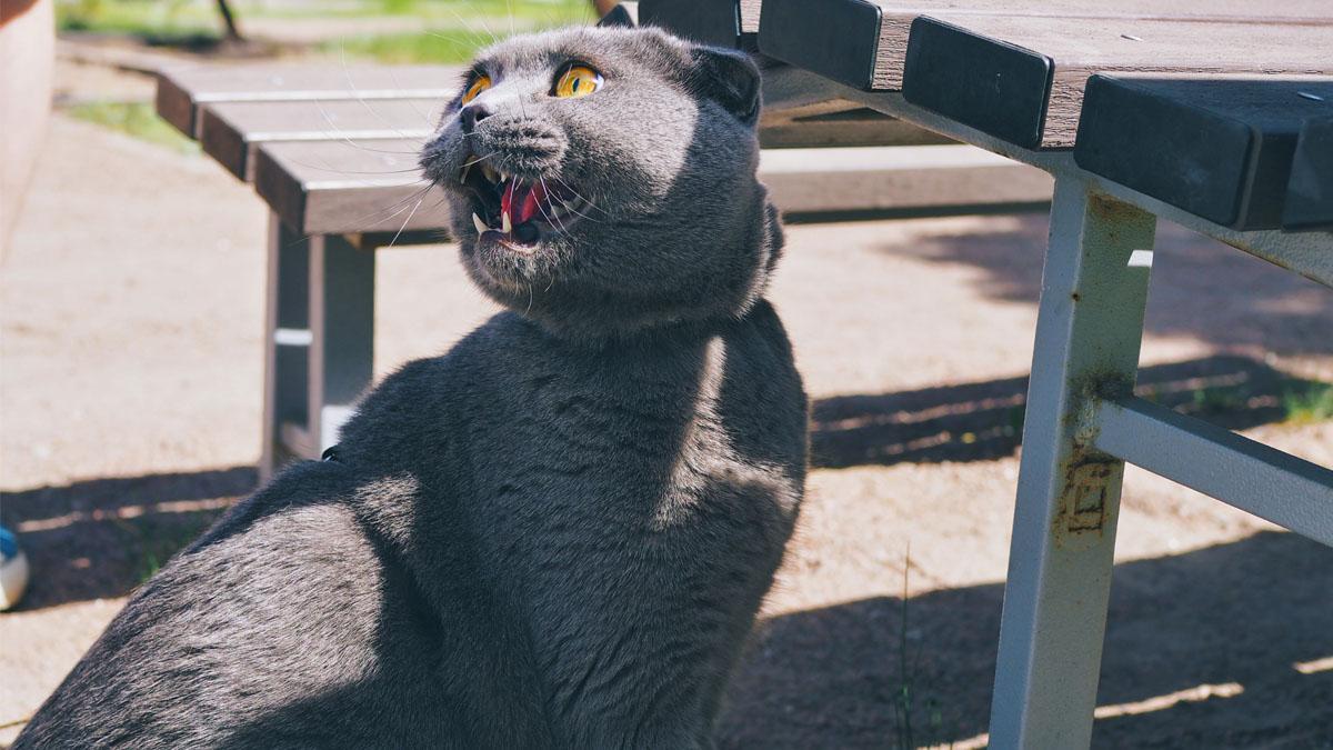 Katzenleine_Katze_an_die_Leine_gewöhnen