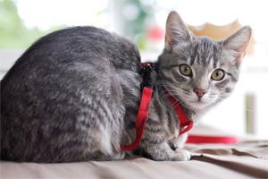 Die Berührung des Materials am Körper finden viele Katzen suspekt. Mit einfachem Verbandsmaterial kann dieses Gefühl provoziert und mit positiven Aktionen verknüpft werden.