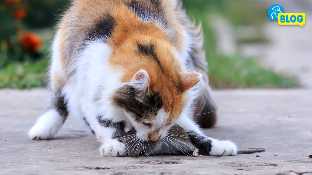 Jagdverhalten Katze - Katzenerziehung