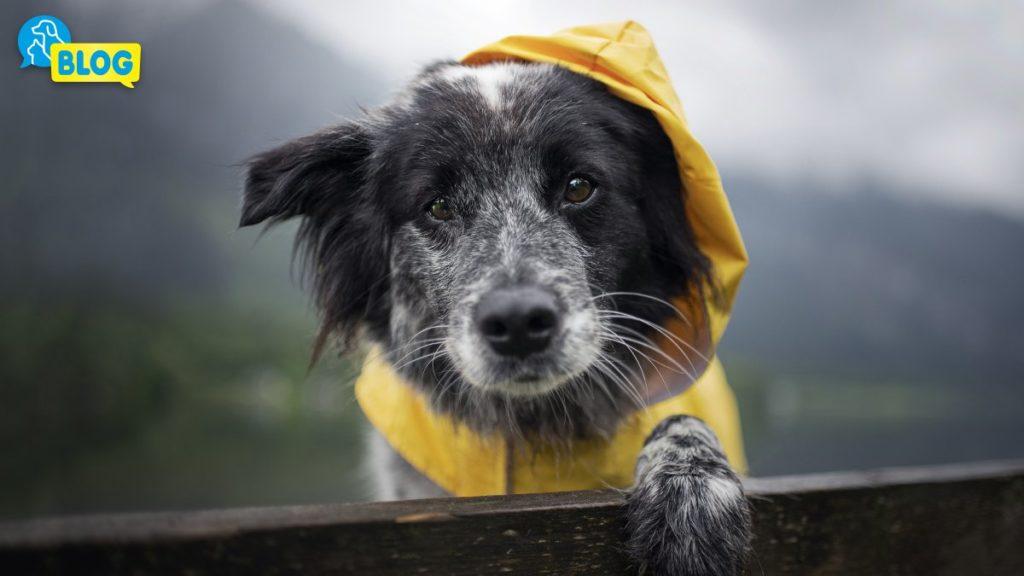Hundemantel-Regenmantel-Hundebademantel