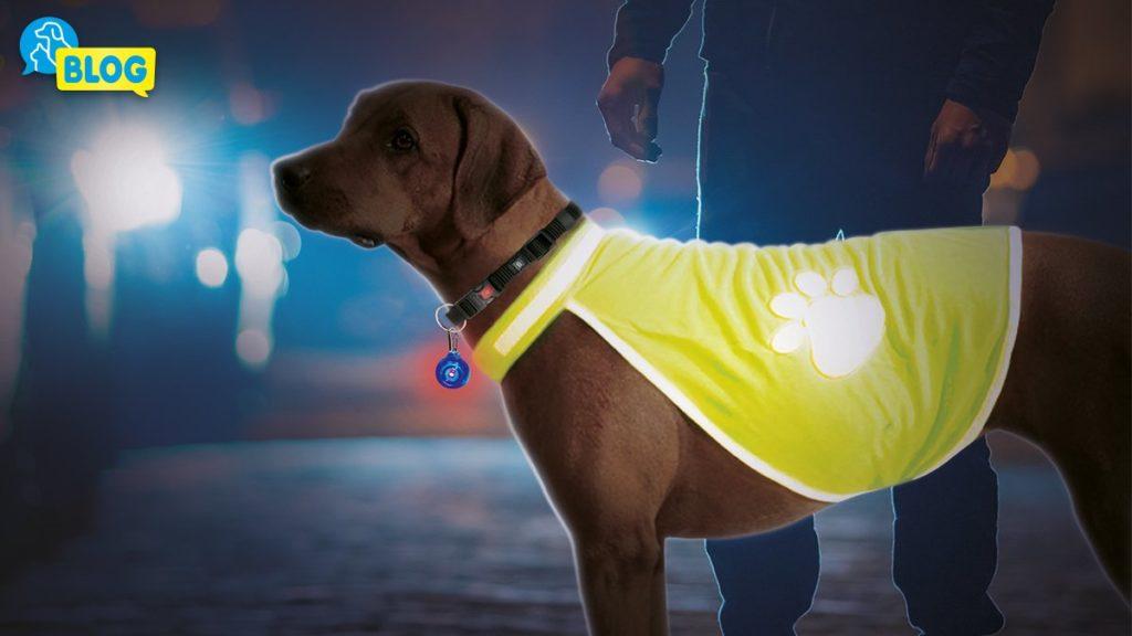 Sichtbarkeit im Dunkeln für mehr Sicherheit (Leuchtartikel für Hunde)