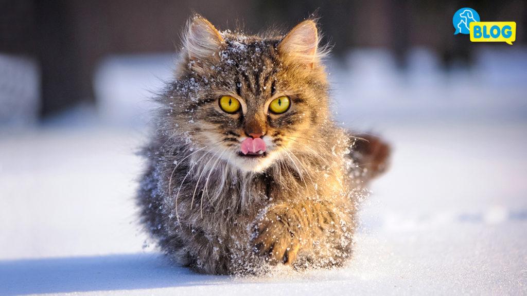 Gefahren Katze im Winter