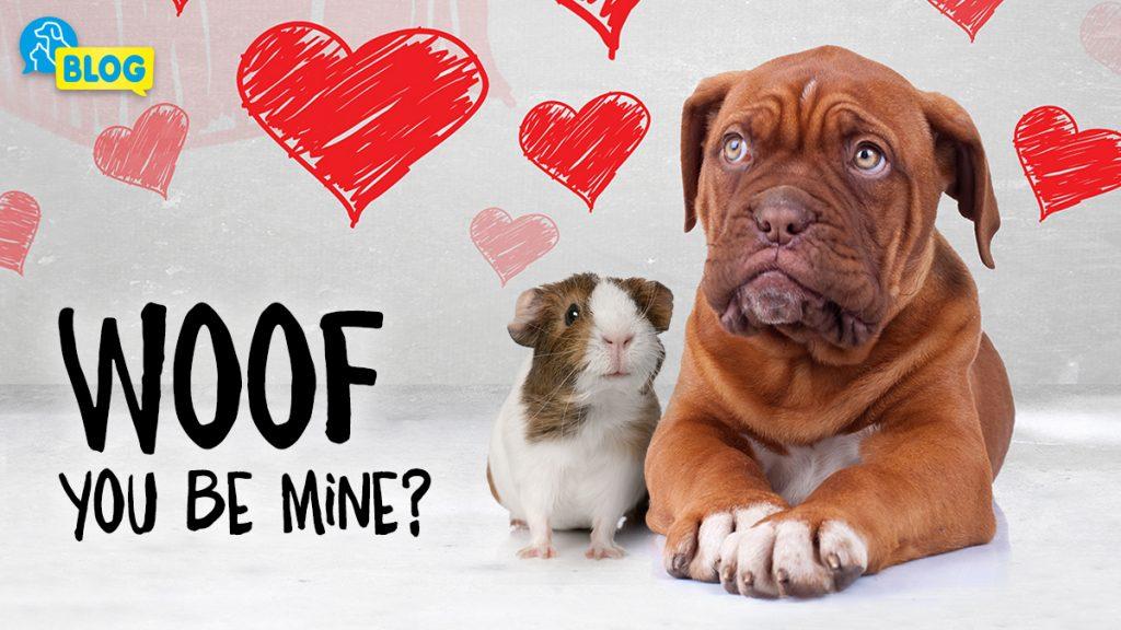 Valentinstag Geschenkideen für die Tiere