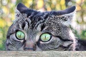 Markieren Katze als Stressabbau
