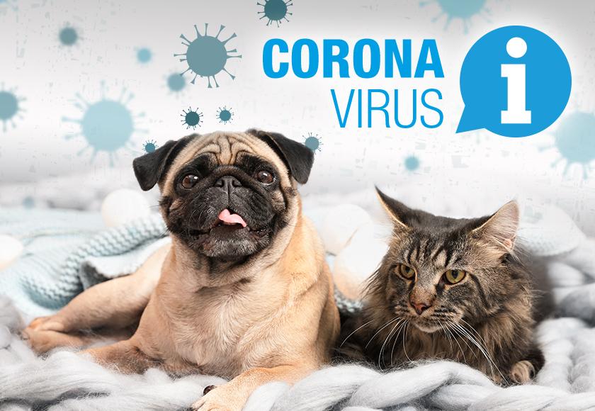 Coronavirus und Haustiere