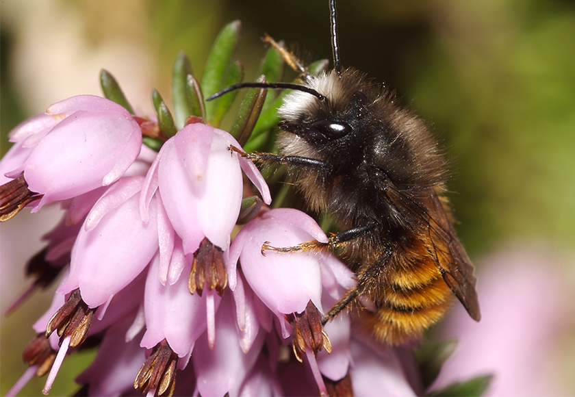 Wildbienenhäuschen_Insektenhotel