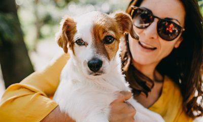 Wissenschaftlich bewiesen: Darum sollte man ein Haustier haben
