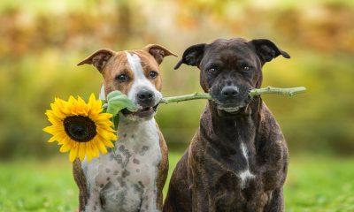 Hundetraining, clickertraining hund shapen