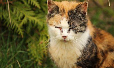 katzenschnupfen homöopathisch behandeln