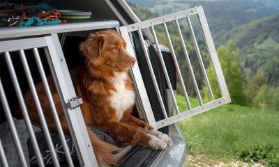 Sicher unterwegs mit Hund: Hundebox, Veloanhänger, Hundebuggy