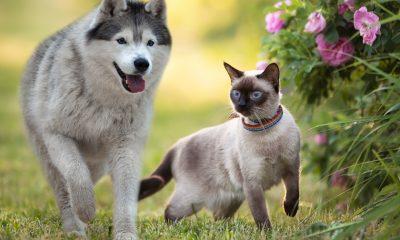 Giftige Pflanzen für Hunde & Katzen