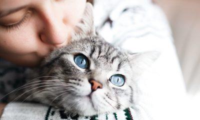 Katzenalter in Menschenjahre umrechnen