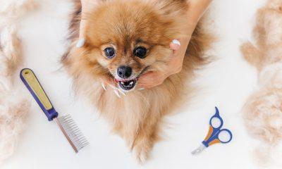 Hund scheren: Hundefrisuren für warme Jahreszeiten