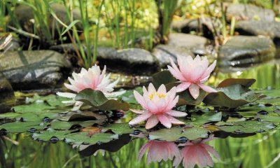So machen Sie Ihren Teich fit für den Frühling
