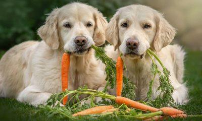 Natürliche Hundeernährung