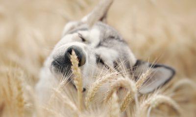 Grannen bei Hund und Katze