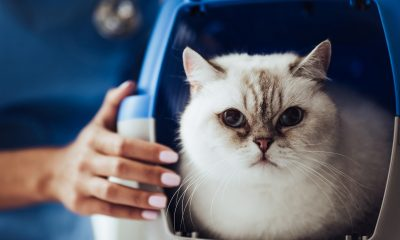 Katze kastrieren sterilisieren
